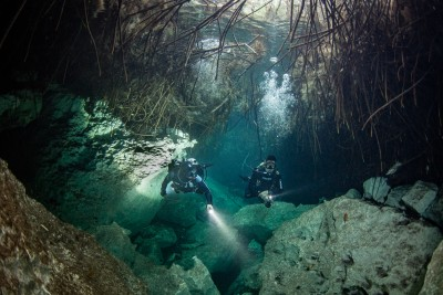 Divers in the mangroves